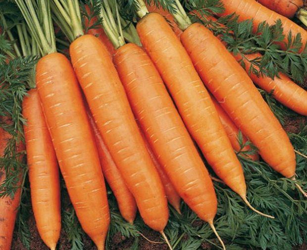 Морковь, сорт Марион F1.