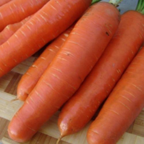 Морковь, сорт Анета F1