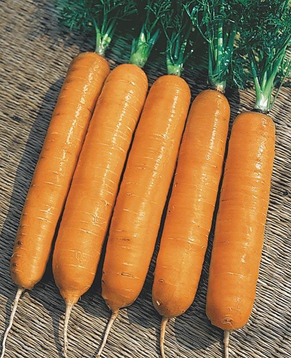 14333 Морковь, сорт Самсон