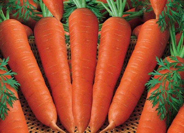 Морковь, сорт Цидера