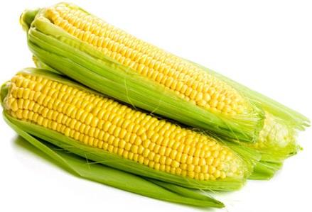 Сахарная кукуруза, Лендмарк F1
