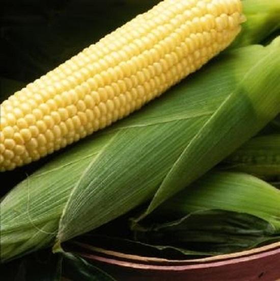 Сахарная кукуруза, Спирит F1