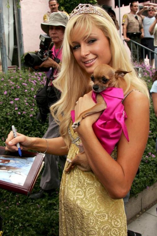 Последние новости. Пэрис Хилтон оплакивает смерть любимой собачки