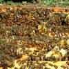 Пчеловодство для начинающих фото - 5131 100x100