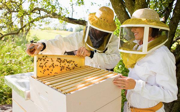 Пчеловодство. Вредители