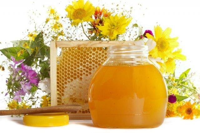 Пчеловодство. Медицина