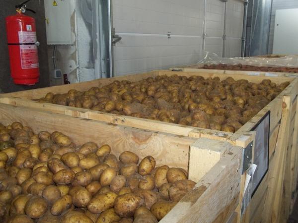 Хранение урожая картофеля