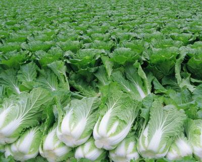 Значение капусты
