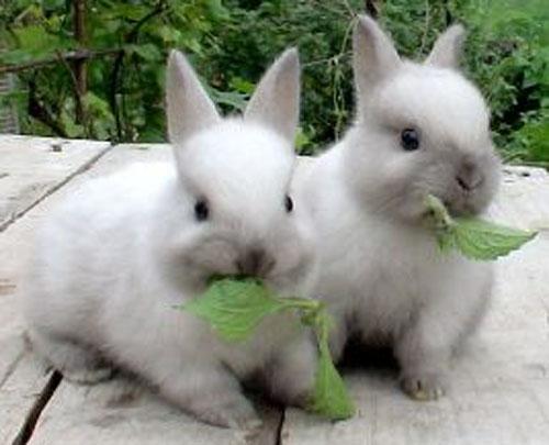 Можно ли прокормить кроликов без зерна ?