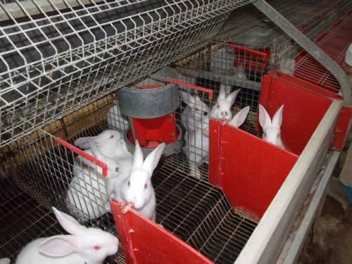 20412 Выращивание кроликов