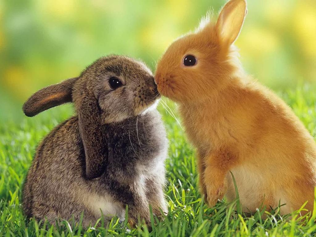 20457 Болезни кроликов, лечение и профилактика. Инфекционные