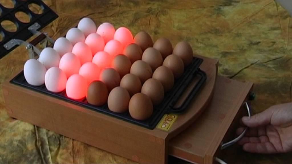 Оценка качества инкубационных яиц