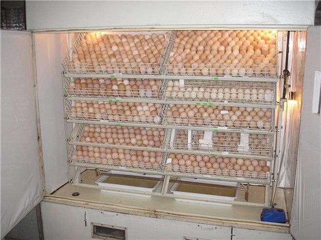 20496 Инкубатор своими руками из холодильника