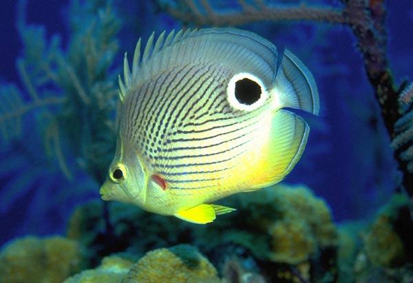 Неоновая болезнь или Плистифороз — заболевания аквариумных рыб