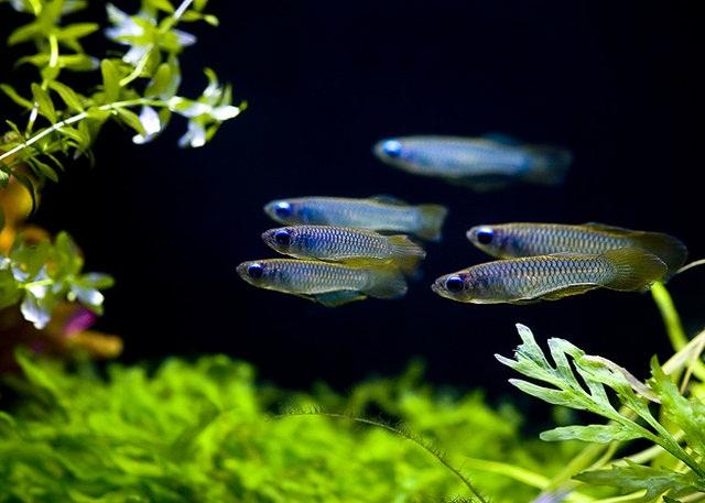 Плавниковая гниль — заболевания аквариумных рыб