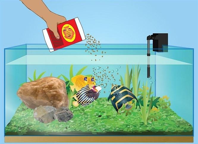 Кормление аквариумных рыб — Типы кормов