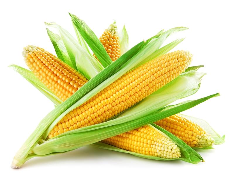 Растение Кукуруза