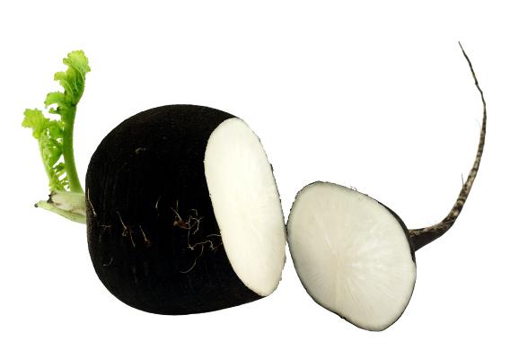 Растение Редька черная
