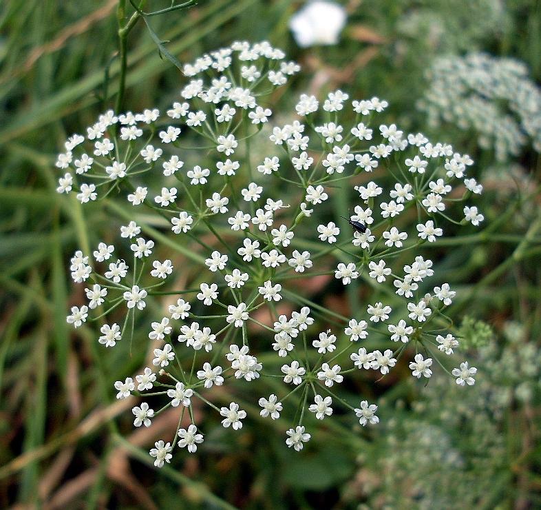 Растение Резак