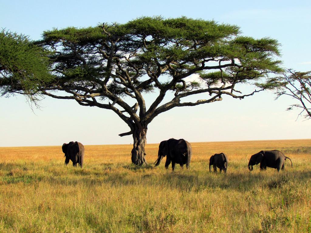 Танзания — не только сафари