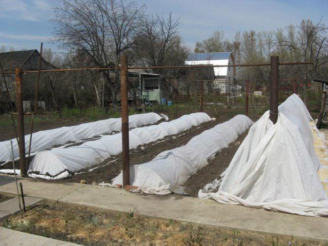 24001 Подготовка винограда к зиме