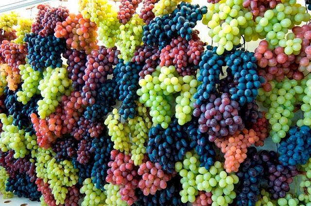 24012 Свойства винограда