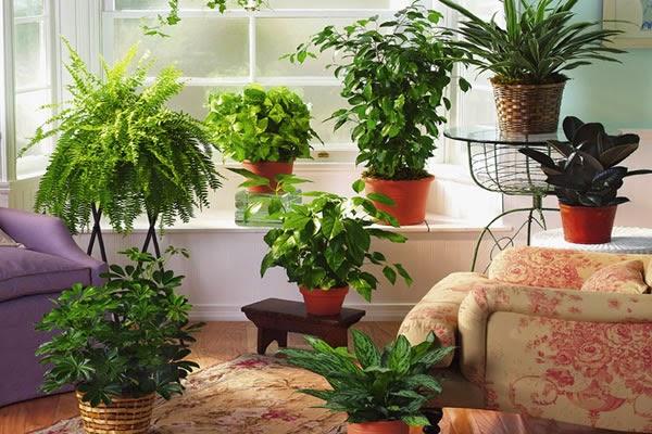 Комнатные растения в мае