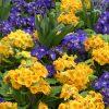 Как нужно подбирать первоцветы, чтобы клумба была красивой