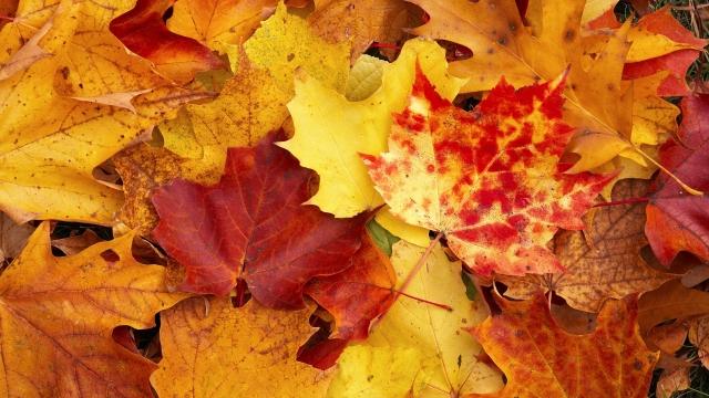 Надо ли убирать осенью опавшую листву