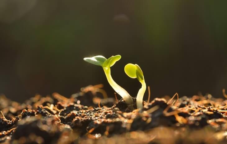 Как понизить кислотность почвы