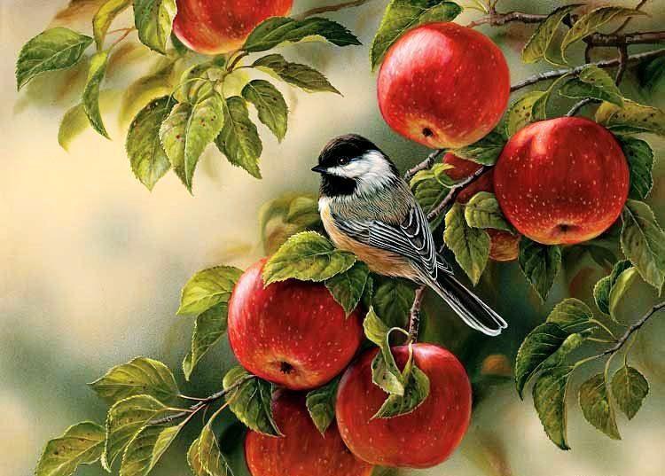 Когда снимать яблоки, чтобы они хорошо хранились?