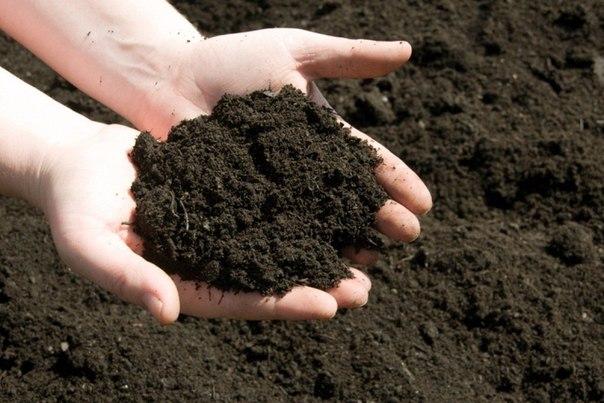 25492 Как определить кислотность почвы