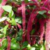 25495 Комнатные растения для души