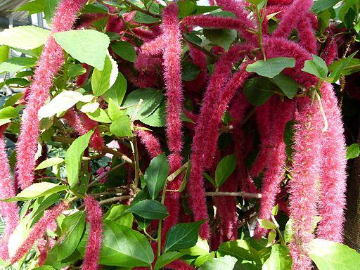 Комнатные растения для души