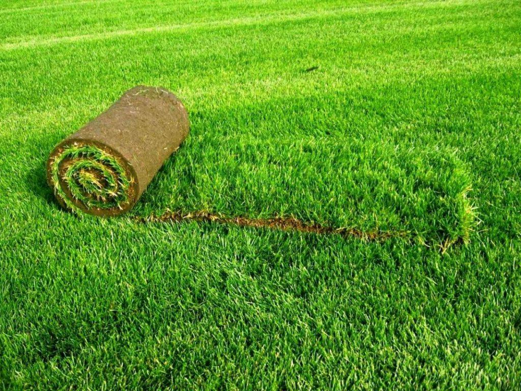Рулонные газоны — преимущества