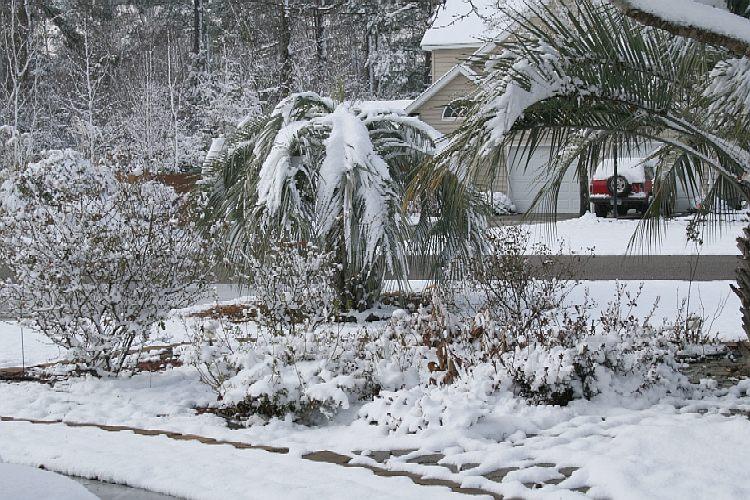 Садовые работы в феврале