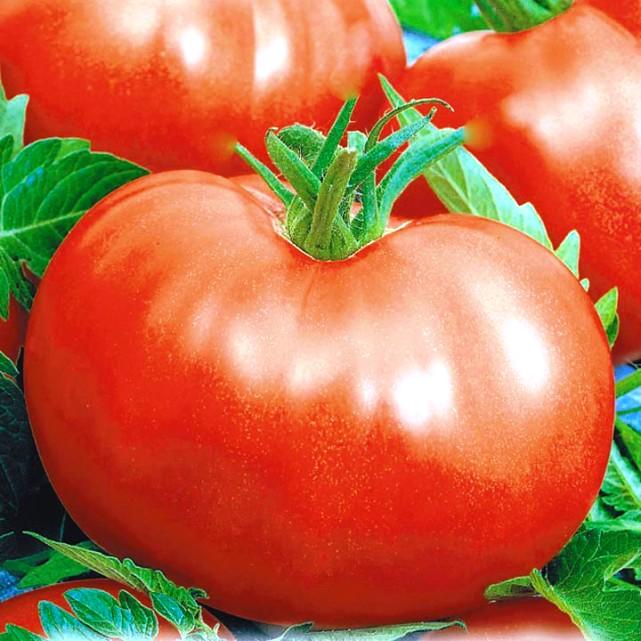 Проблема с самоопылением томатов