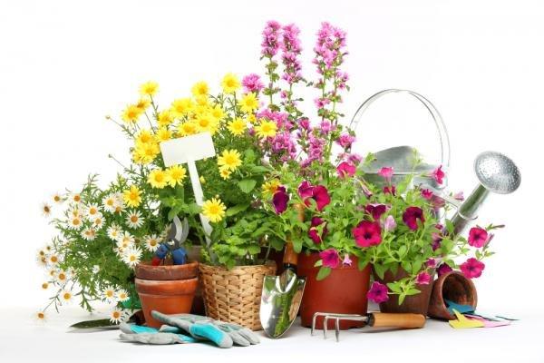Дачные советы к весеннему сезону