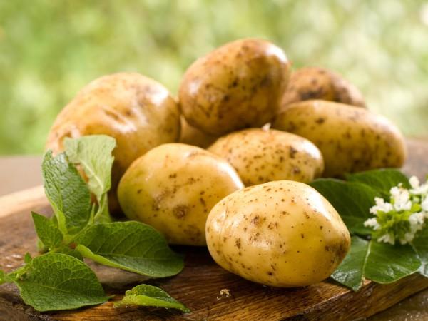 Хороший урожай картофеля? Учимся правильно хранить