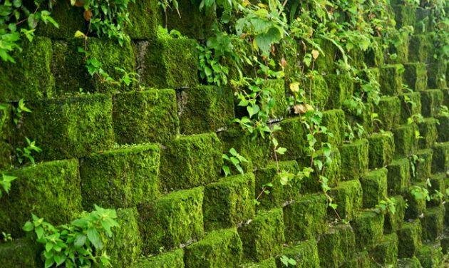 Как использовать мох в огороде