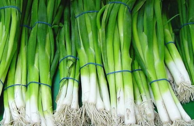 Выращивание зеленого лука по правилам