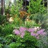 Растения, растущие в тени фото - 9993 100x100