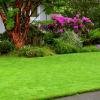 Газонная трава семена фото - 10115 100x100