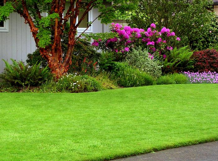Газонная трава семена