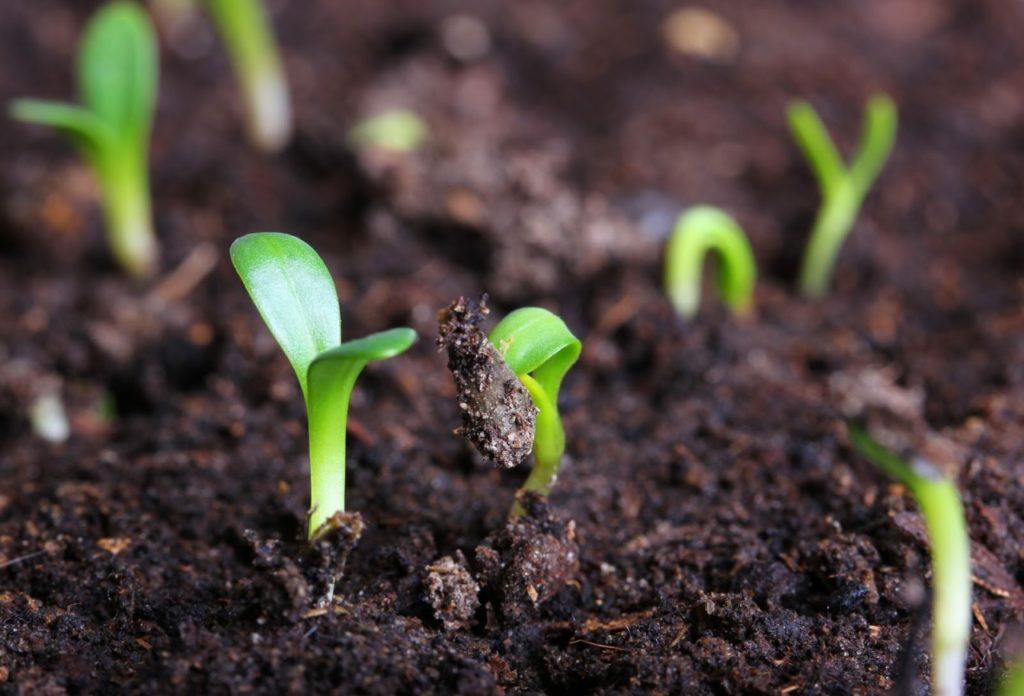Садить цветы в землю во сне