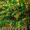 25731 Подкормка винограда весной