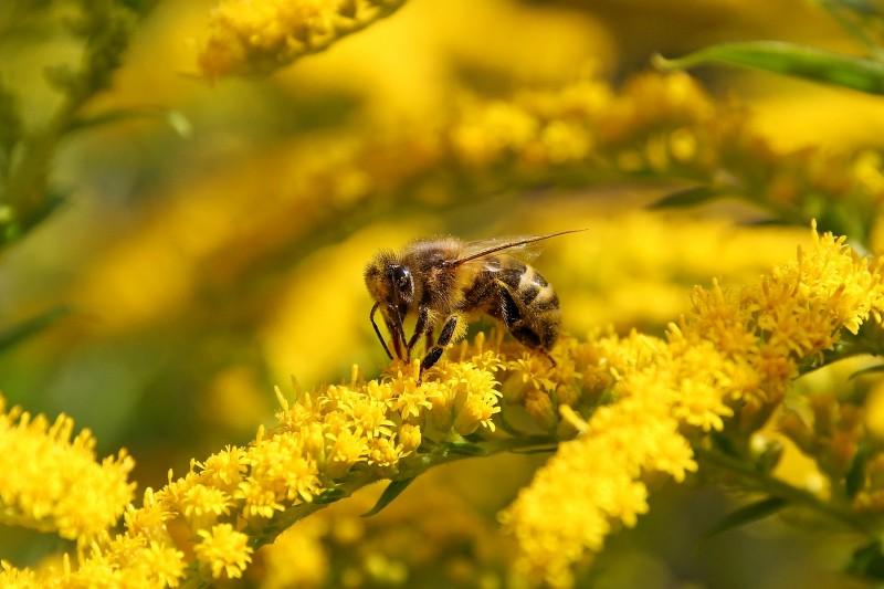 Болезни пчёл. Нектарный токсикоз