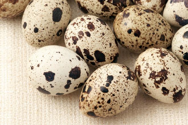 Диетические и целебные свойства мяса и яиц перепелов