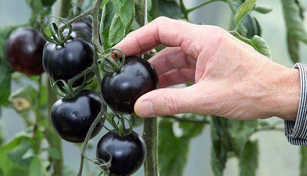 40 лучших сортов помидоров