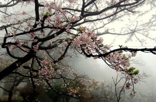 В тумане будних дней фото - 110 540x354